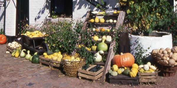 12989297776 marcq-en-baroeul.org - Maraîchers Agriculteurs Apiculteurs - Belles ...